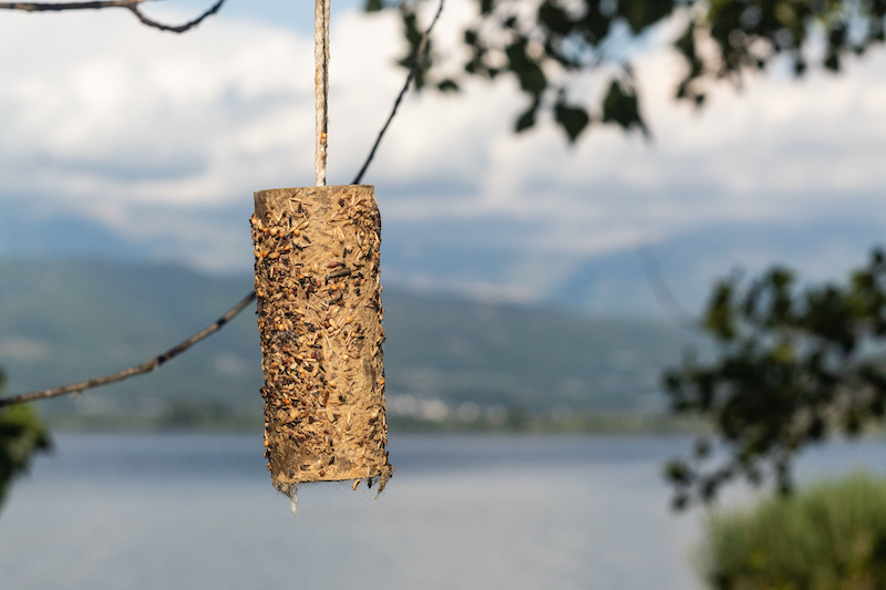Bird feeder made by children out of a used paper roll